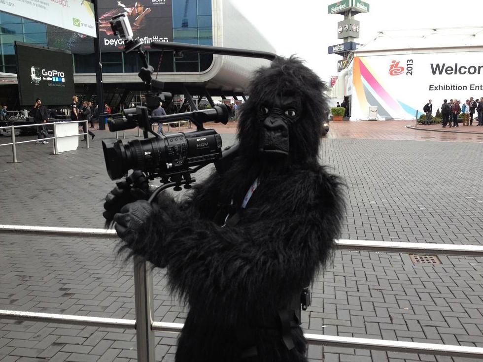 IBC 2013 gorilla